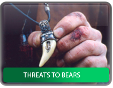 Threats to bears